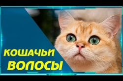 Embedded thumbnail for Кошачьи волосы